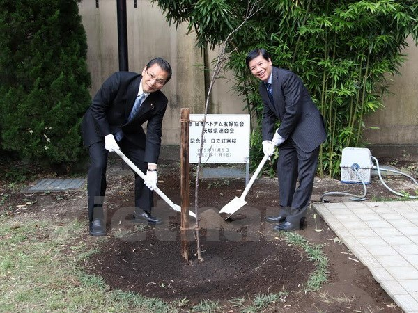 Ibaraki prefecture presents cherry tree to Vietnamese Embassy in Japan