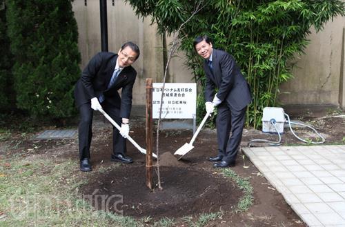 Lễ trồng cây hoa anh đào tại sứ quán Việt Nam ở Nhật Bản